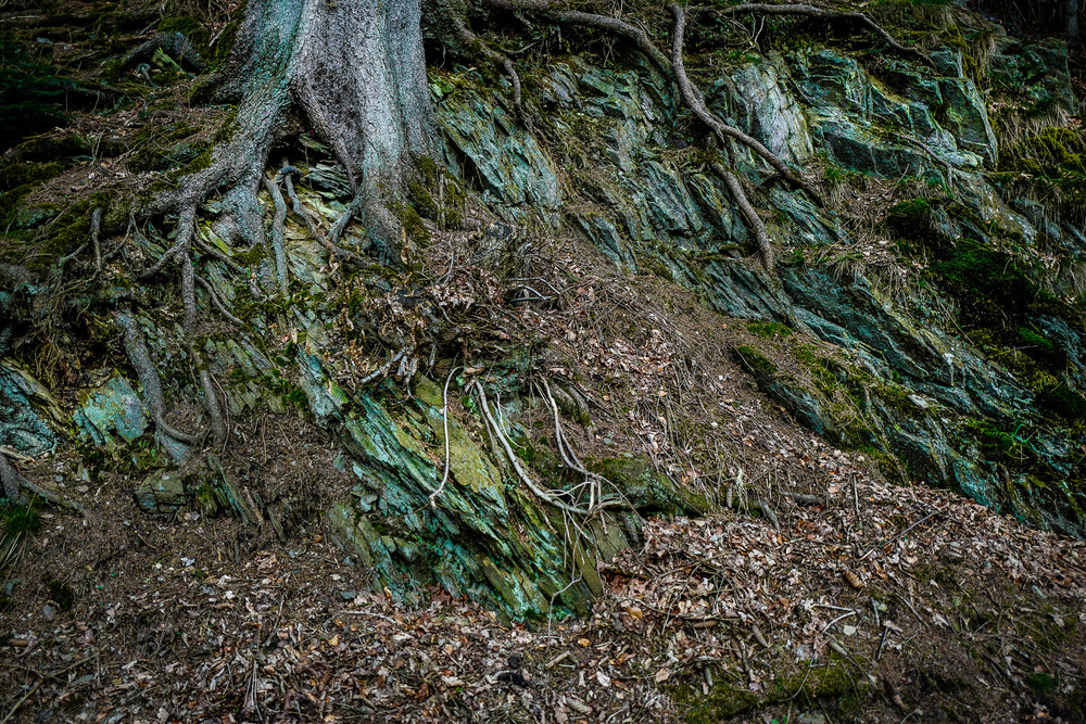 christoph neumann, green velvet, woods, roots, nature, tree