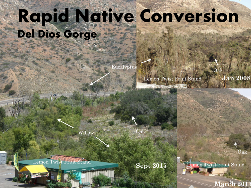 Del Dios Gorge - Habitat Restoration Progression