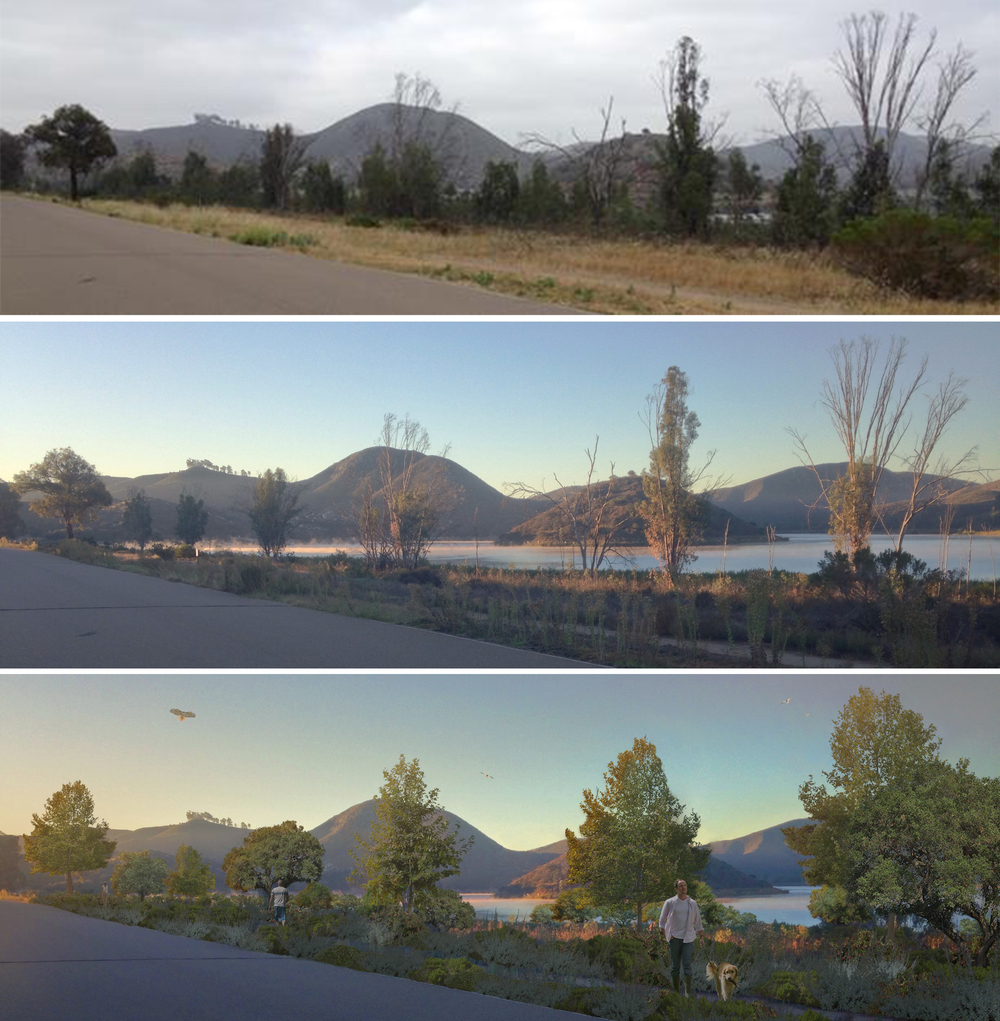 View From the Boat Dock Road The top image was taken in August of 2014, before habitat restoration. The middle image was taken during the restorative process, in November 2015. Bottom image shows the groupings of oak, willow and sycamore that will become the landscape over the next 20 years. The dead eucalyptus will provide structure for birds while the sycamores grow to their full height. View to the water where soils are too rocky to support larger plants. Oaks will choose higher ground that has deep enough soils and the willows will claim the wettest spots.