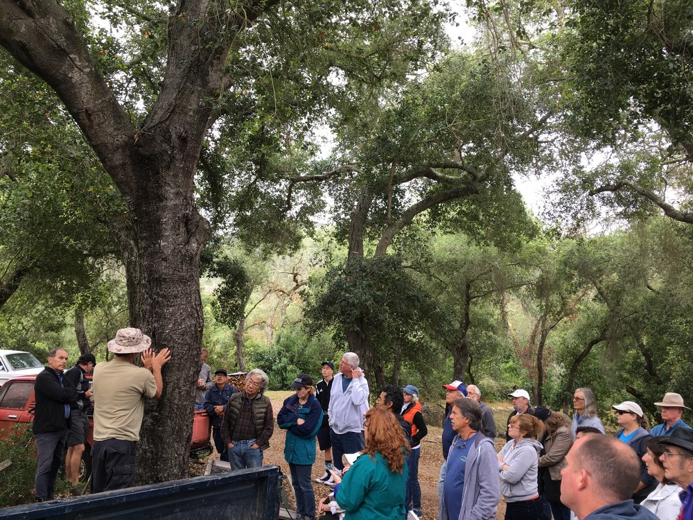 Hands on GSOB Workshop - Wednesday June 21, 6:30 PM Del Dios ParkLearn from Ricardo Aguilar, Certified Arborist, Aguilar Plant Care about the life cycle of the borers attacking our trees and what can be done to keep our oaks healthy.