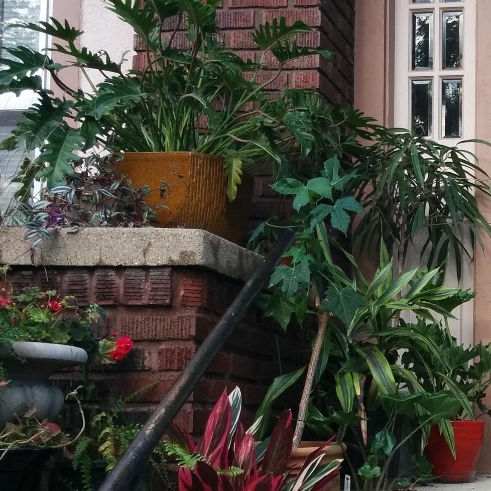 houseplant services -