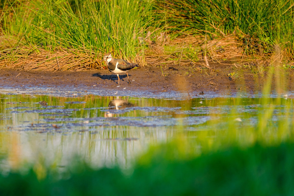 nature-bird-evening (9 of 10).jpg