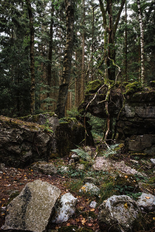 Hurtgen Wald-12.jpg