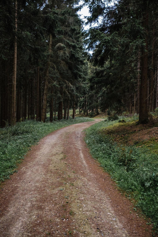 Hurtgen Wald-3.jpg