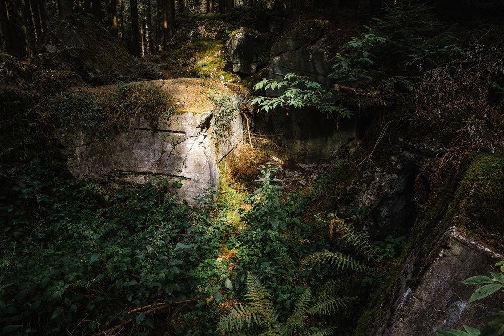 Hurtgen Wald-6.jpg