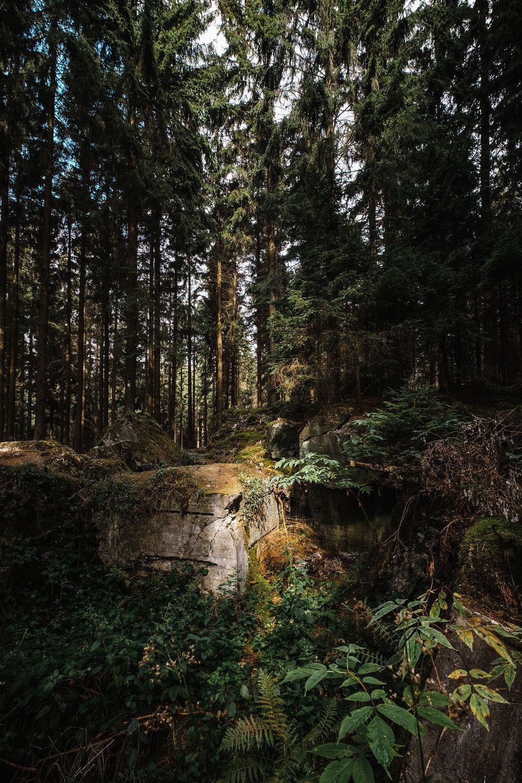 Hurtgen Wald-7.jpg
