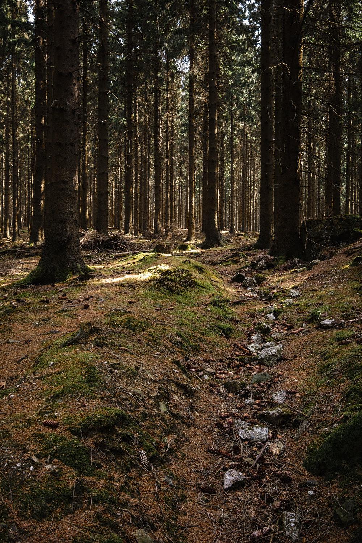 Hurtgen Wald-9.jpg