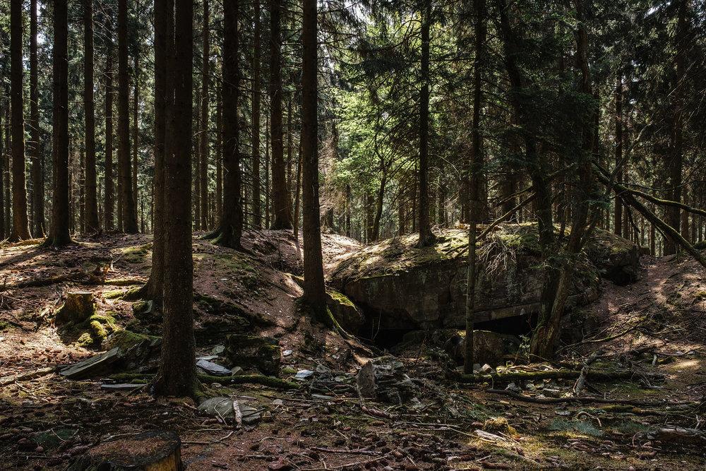 Hurtgen Wald-16.jpg