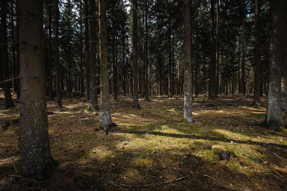 Hurtgen Wald-19.jpg