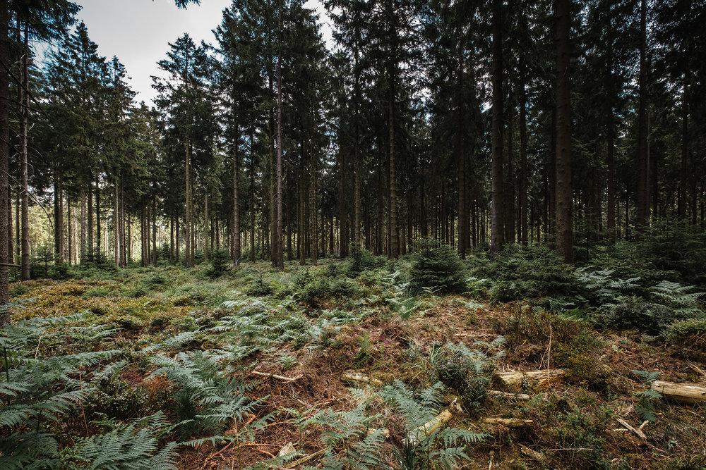 Hurtgen Wald-20.jpg