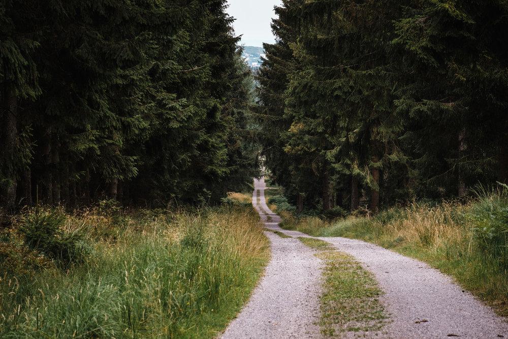Hurtgen Wald-21.jpg