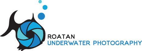 Roatan Underwater Photography