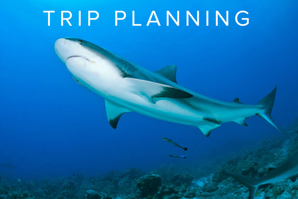 ROATAN TRIP PLANNING & TRAVEL