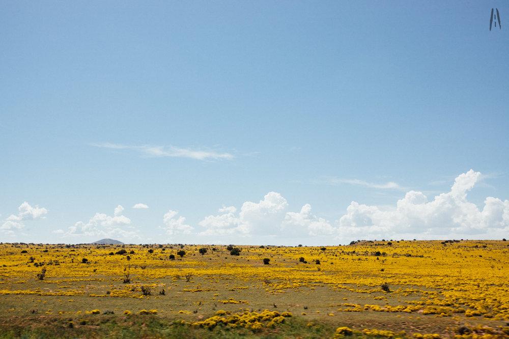 Somewhere between Santa Fe and Albuquerque.