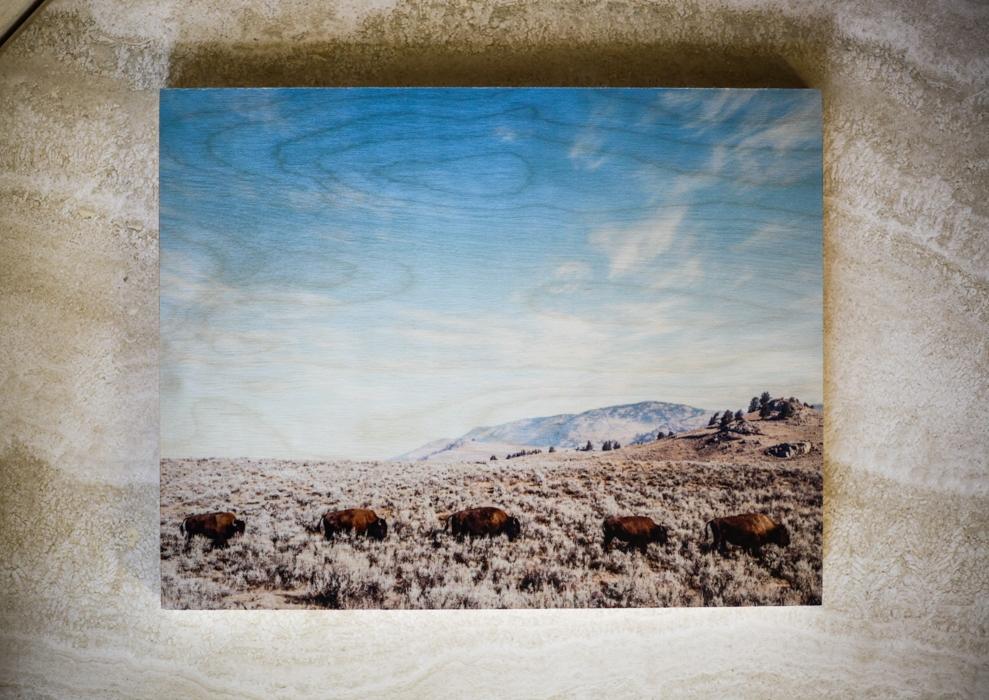 Buffalo Roaming : 11x14