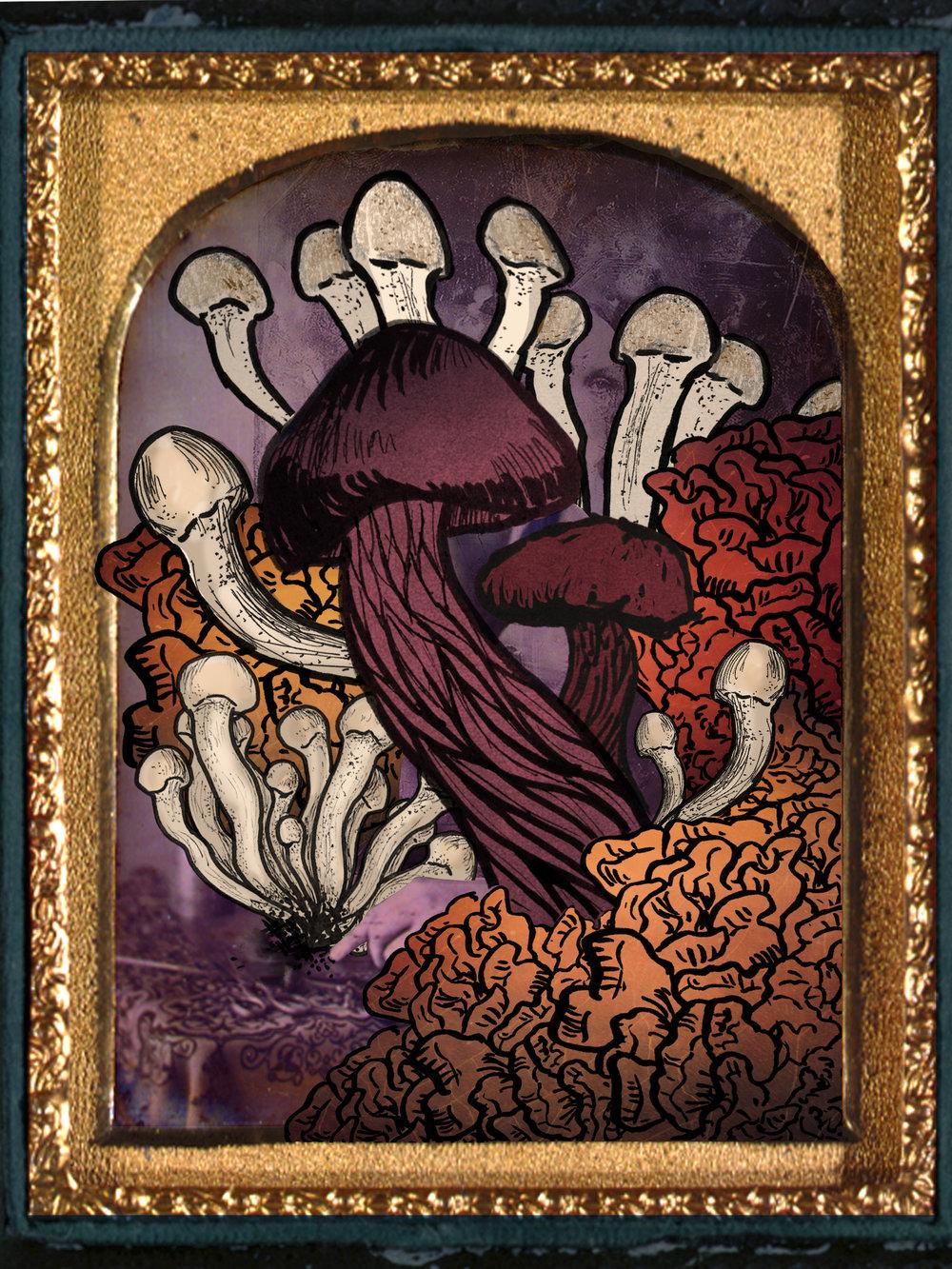 Mushroom History.jpg
