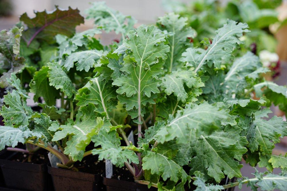 Brassica- Winter.jpg
