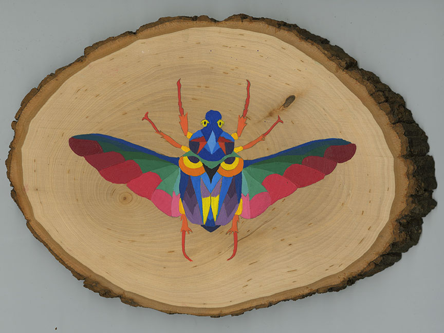 bug on wood 72.jpg