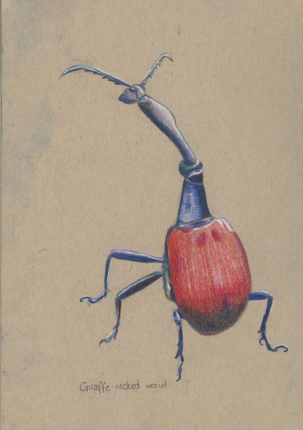 weevils.jpeg
