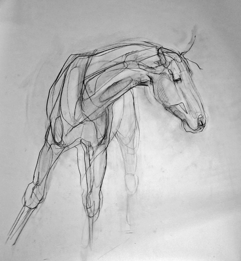warmblood sketch.jpg