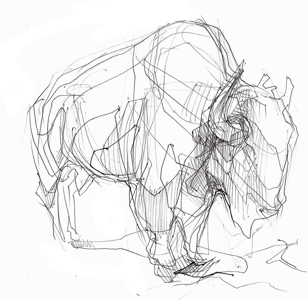 bison sketch_edited-1.jpg