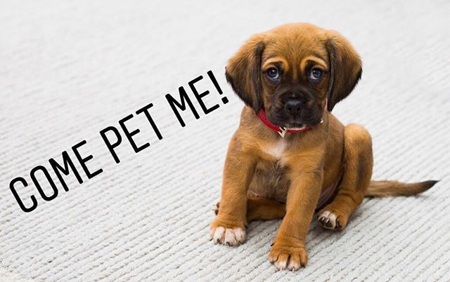 TOMORROW from 2-4pm: Bark Buddies will be in the business school library! Come say hi to some puppies!🐶
