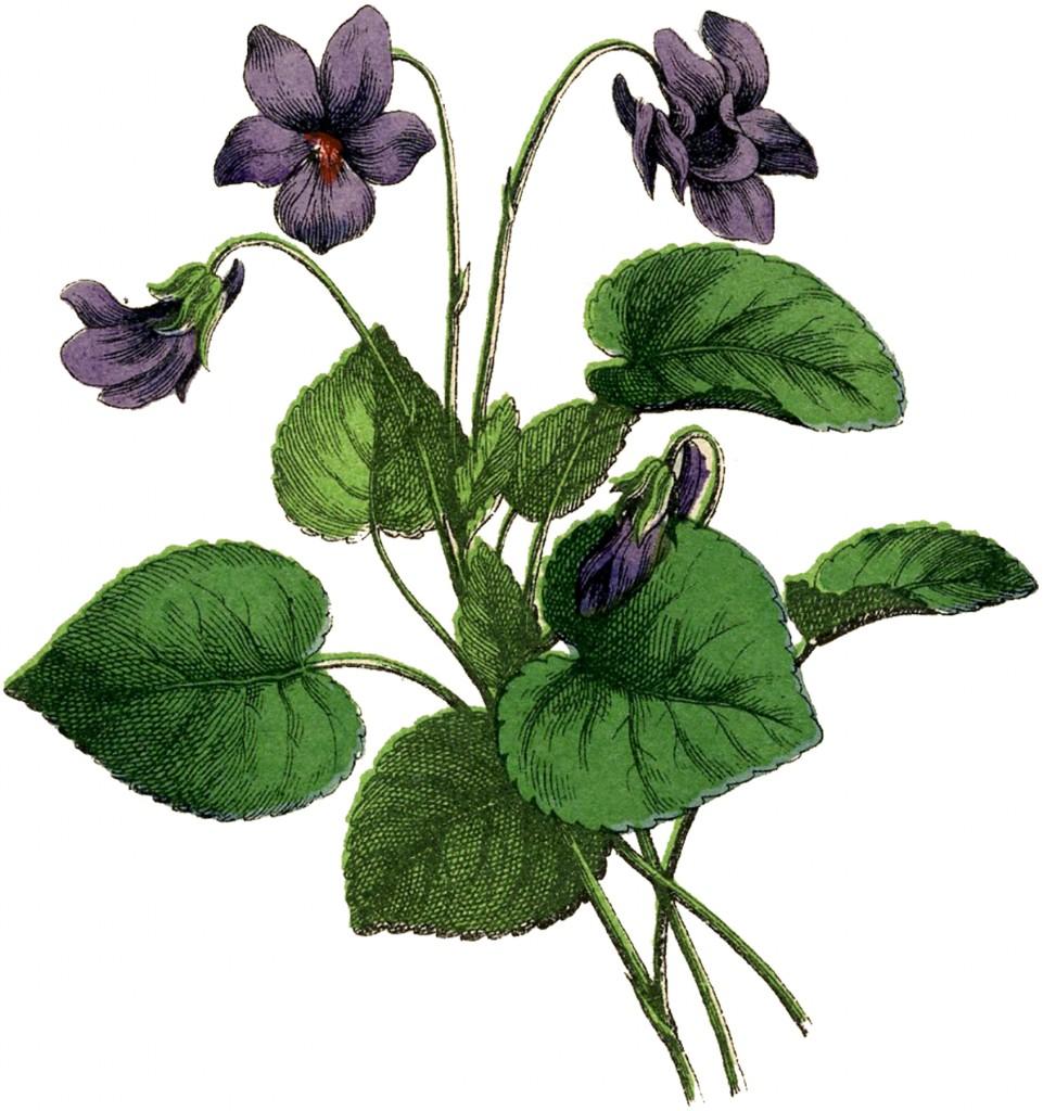Vintage-Violets-Image-GraphicsFairy-961x1024.jpg