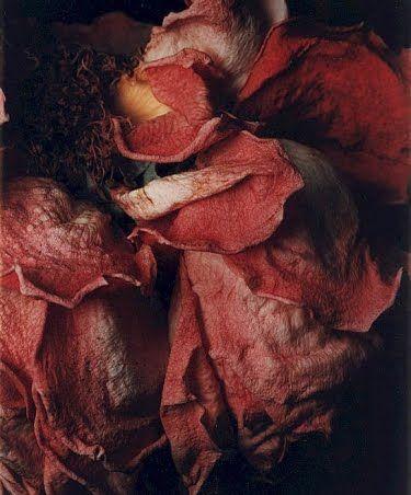 roses for natural perfume