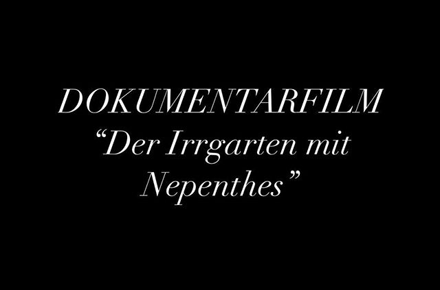 New short film is out! Watch our show live at Antennengluehn Festival 27th October live at Black Box Gasteig! Link in Bio.  #ocean #whales #love #fightlookism #veganrecipe #vkko #live #fitness #running #recipe #violin #guitars #music #ibiza #springbreak #techno #house #berlin #berghain #panoramabar #dslr #analogphotography #amazing #dog #mainecoon #munich #beer #fashion #beach