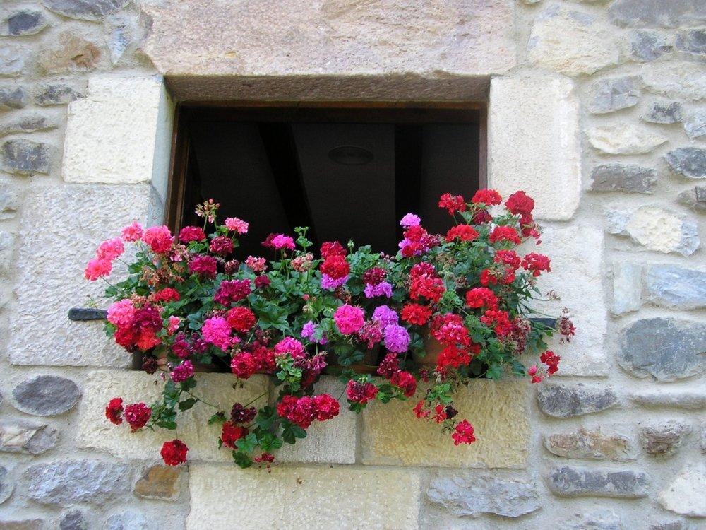 flowers_colors_flowering_house_flowers_in_the_window_spring_summer_cottage-1324719.jpg