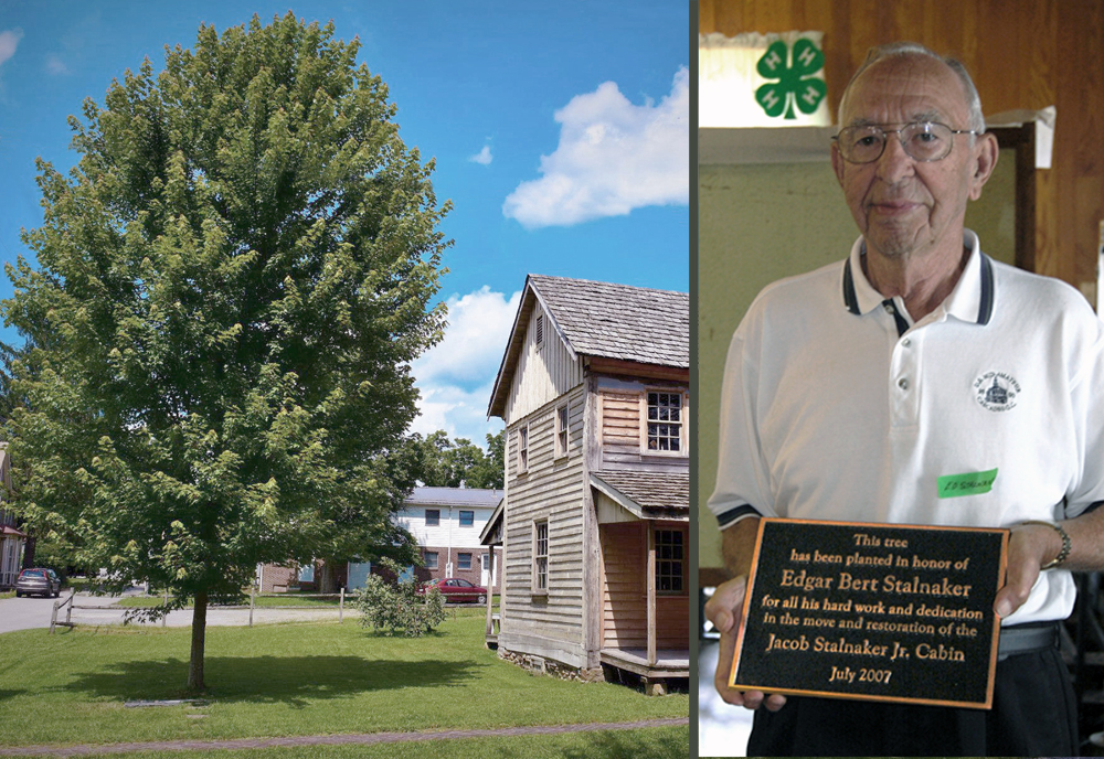 Tree planted in honor of Edgar B. Stalnaker's work.