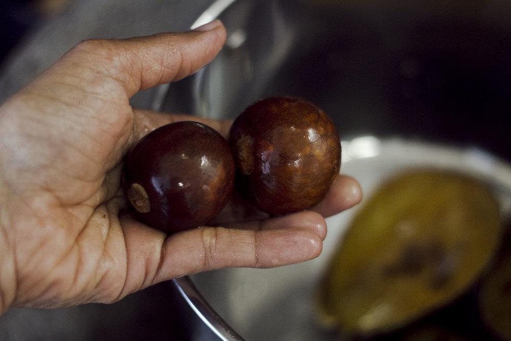 avocado1_5.jpg