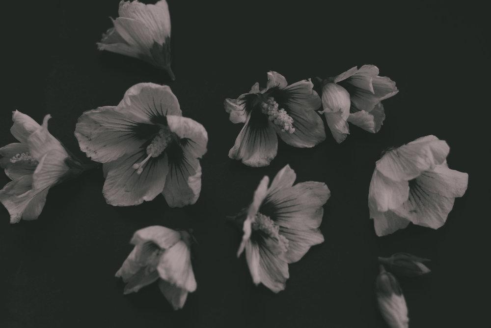 Urbarium / Herbarium  ' Eine (Heil-) pflanzenübersicht für urbane Kräutersammler