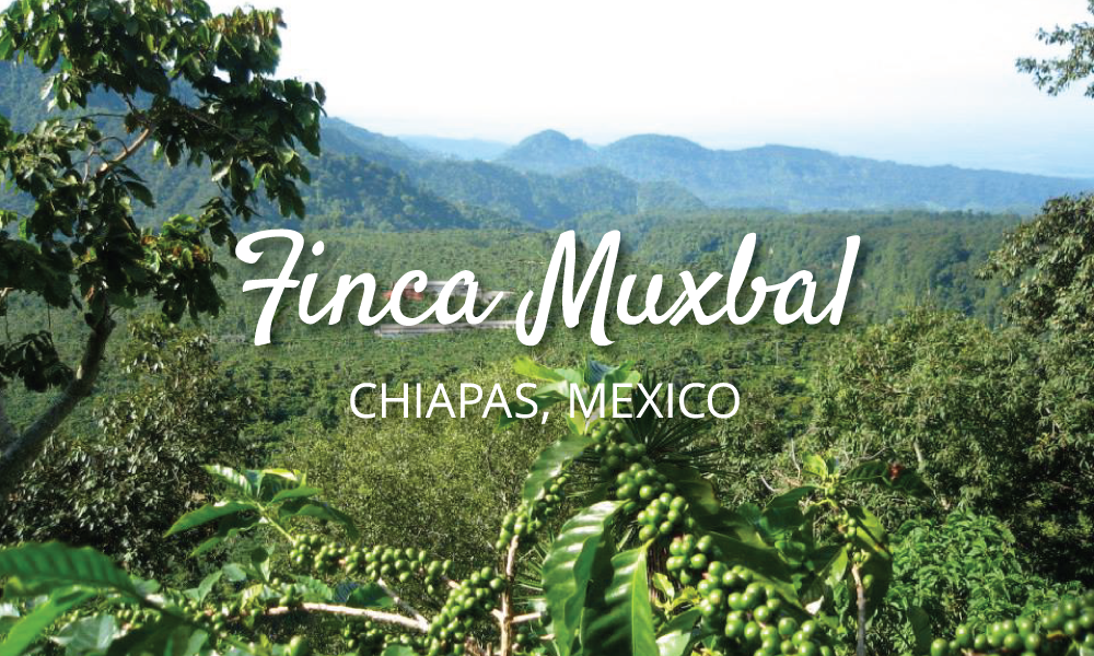 New coffee from Mexico