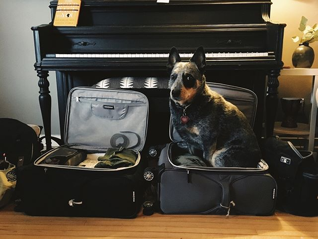 Packing for our first flight with baby girl and the furry boy that first made me a mama is wanting to tag along 😂 Also, in my stories today I'm answering a three part question! ✨ Check it out if you want to hear about how we mentally prepared, what it was like seeing our daughter for the first time (not what you would expect!) and our open adoption which I'd love to talk more about. Also want to note that I speak only from my situation so if your adoption looked different or you have a different perspective, that's great. This is just mine. ☺️