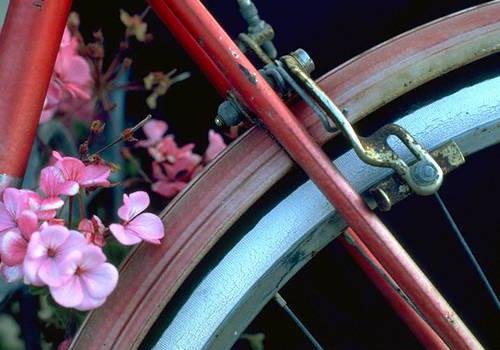 floralbike-Edit.jpg
