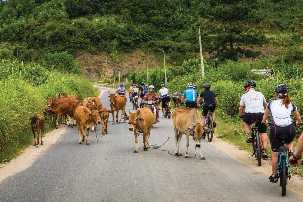 Cycling_in_Vietnam-original.jpg