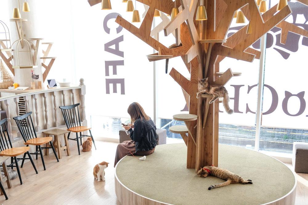 mocha cat cafe tokyo