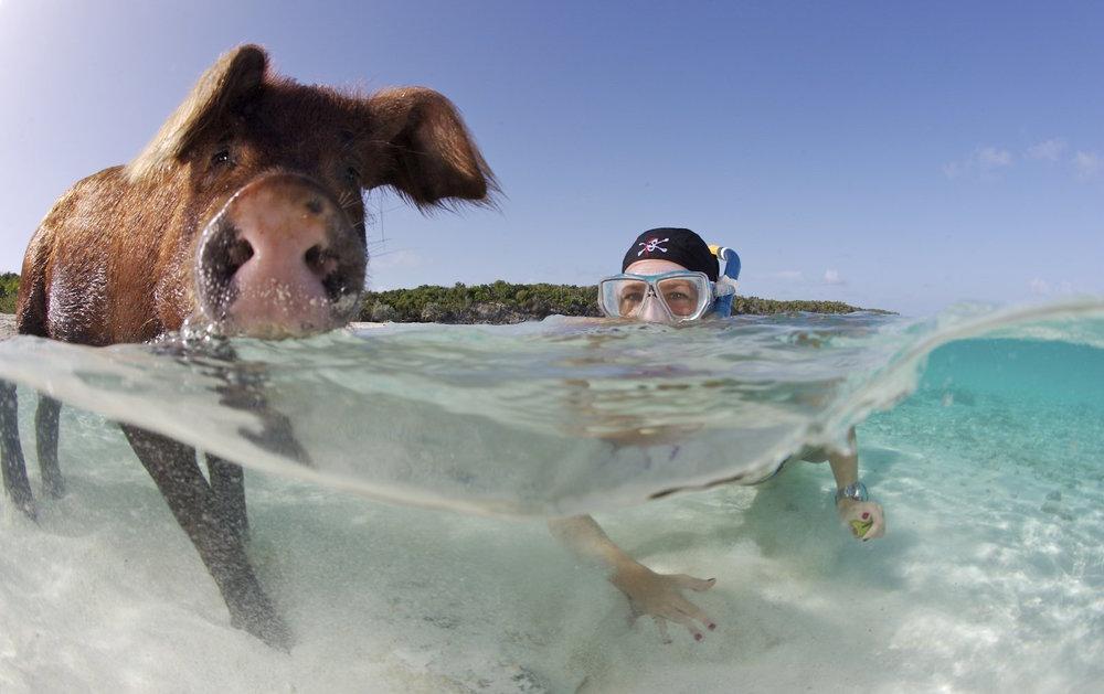 pigs-exumas-bahamas-snorkeling.jpg