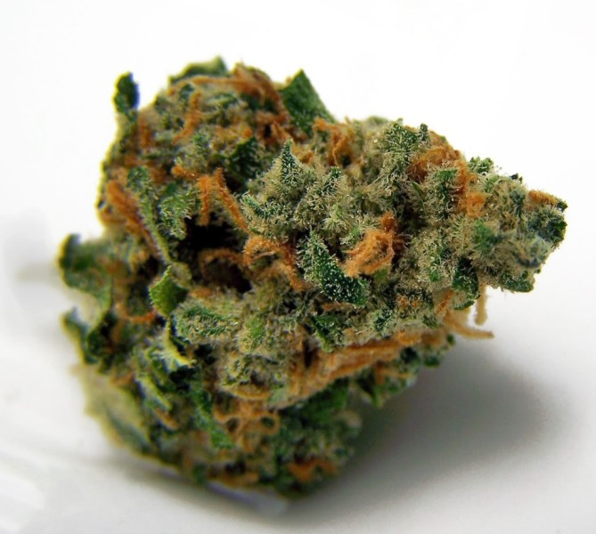 Premium Flower ~ Sustainable NW Growers