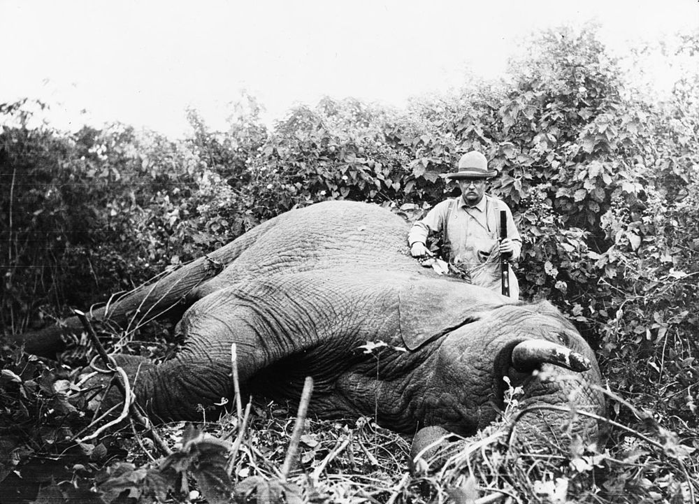 Theodore Roosevelt standing next to dead elephant | [public domain]