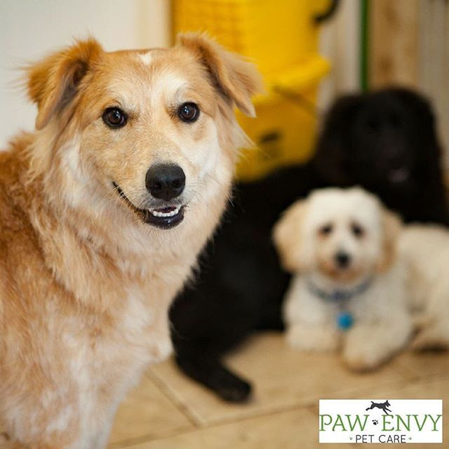 Did you know that at Paw Envy, we are equipped with an awesome team of caregivers that insures that all your pet pals are in good hands. Our services include doggy daycare, grooming, and boarding. Dogs of all ages, breeds, and energy levels are welcome. Come check us out!  #pawenvypetcare #petcare #doggydaycare #petgrooming #doggrooming #sugarlandtx #fortbend #fortbendcounty