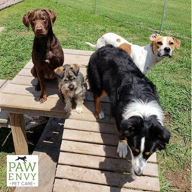 Have your pup join the fun with the rest of the Paw Envy pups next time you go out of town. Reserve your boarding spot by calling us at (281) 242-7297 or booking online at the link in our profile.
