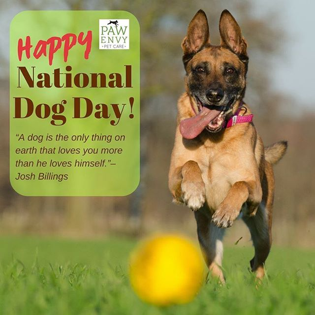 Happy National Dog Day from Paw Envy Pet Care! #nationaldogday #pawenvypetcare #petgrooming #petdaycare #petboarding #sugarlandtx
