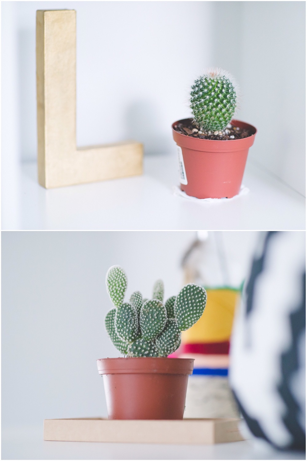 IKEA | Cactus Plants | Boho Decor | Laraina Hase