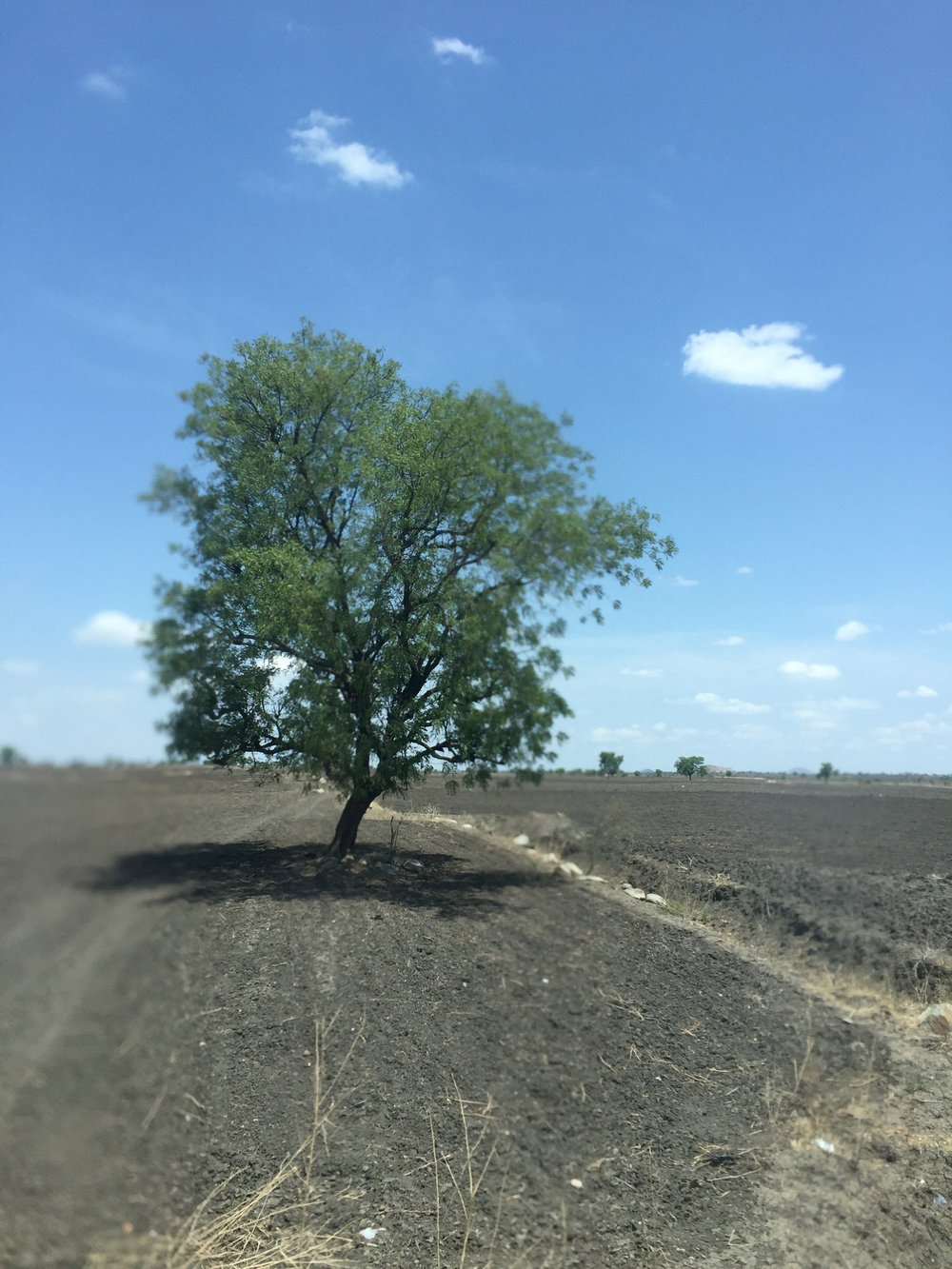 We passed miles of fields like this one on the way to Loyola Xavier, evidence of the three-year drought.