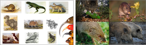 Island species that have gone extinct since the colonization of islands by people shown only by museum specimens and illustration, contrasted by the introduced species that settlers and explores have brought to islands.