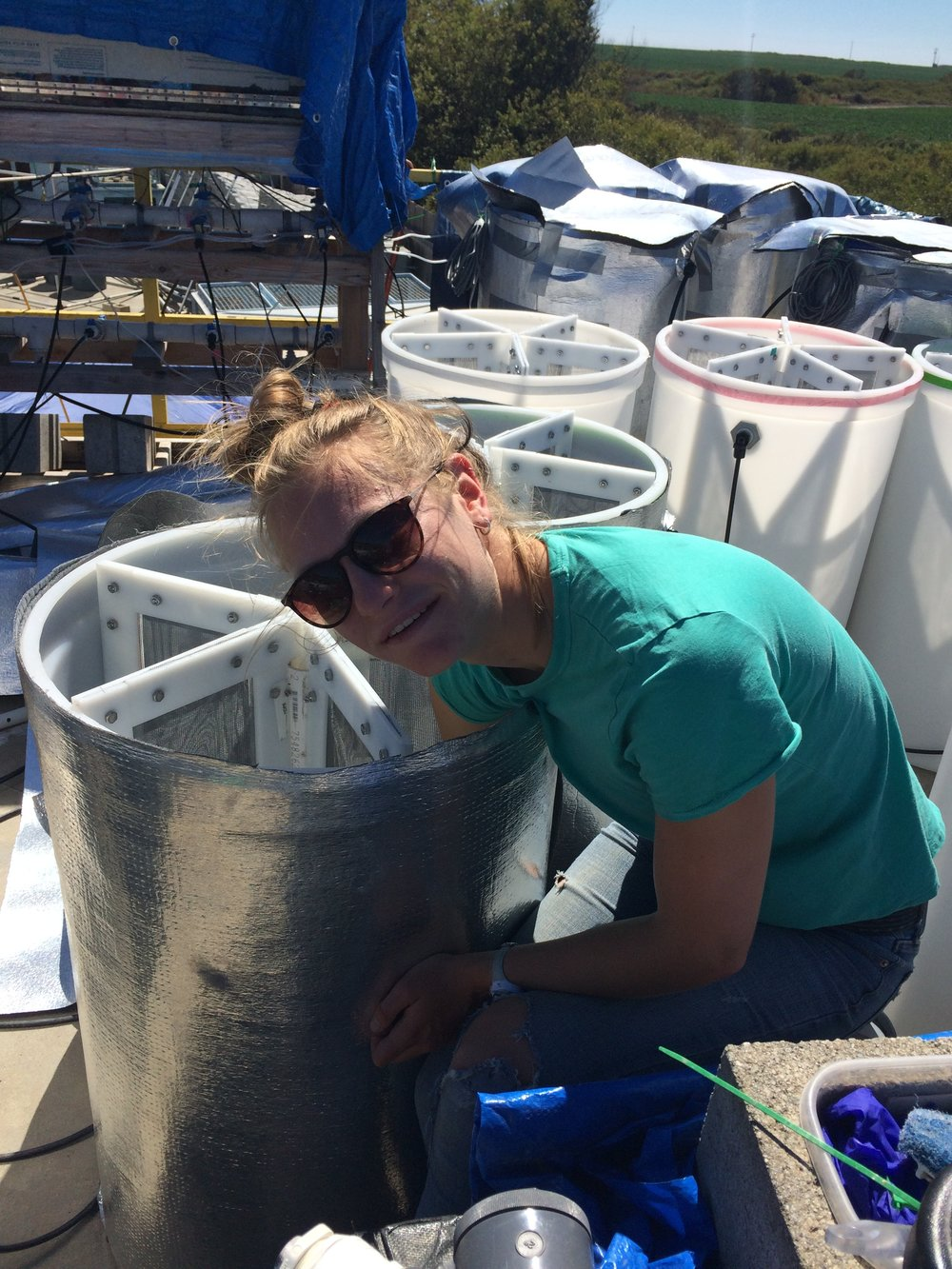 Undergraduate researcher Clare Peabody (Brown University) setting up large experimental tank. Photo credit: E Donham