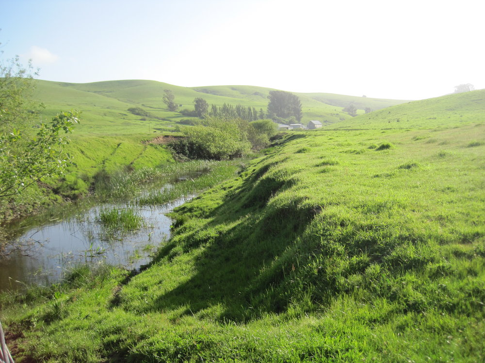 An example of a stream with no trees in Marin. These streams tend to have fewer insect species, an indicator of stream stress.