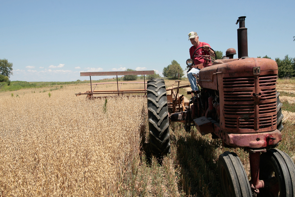 Jerry Lindeman, 73, uses a 1953 tractor and a harvester from 1940 to harvest oats on his farm in Solon.